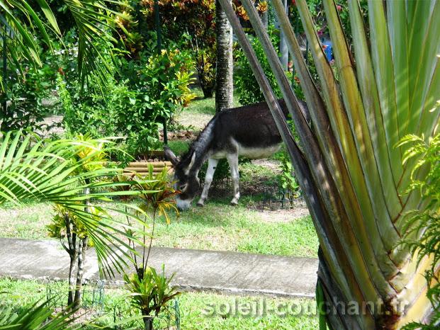Nos 5 G Tes En Location En Guadeloupe